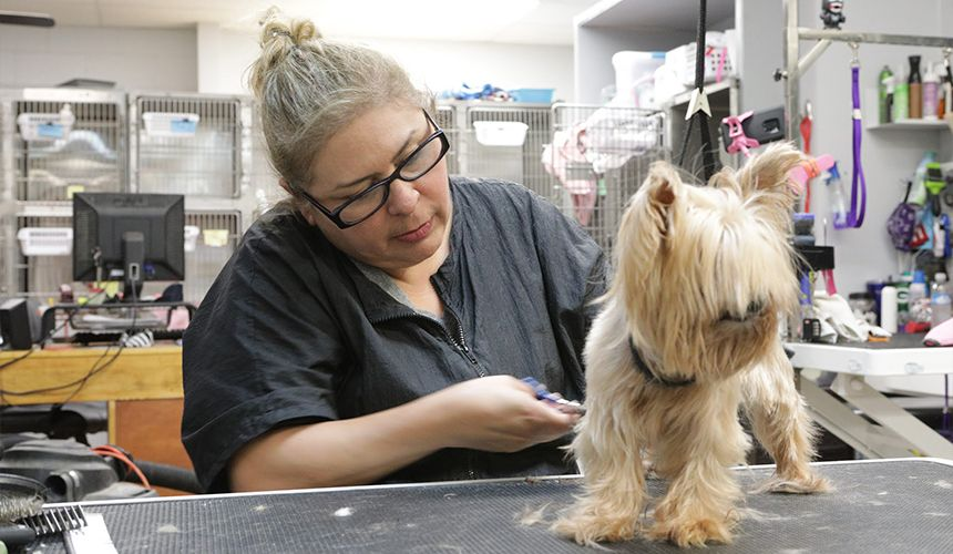 pet groomer giving a bath to a dog at story road animal hospital